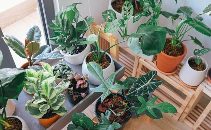 Easy-Indoor-Plants-Cat-Peppyflora