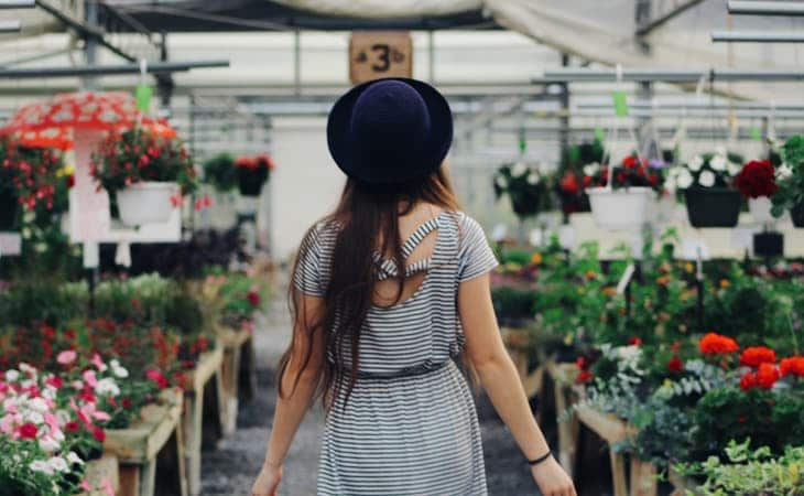 Shop Plants and Accessories Online