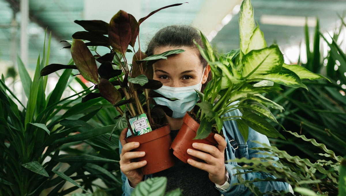 Buying-Plants-Online-in-India-is-Easy-with-Peppyflora-01
