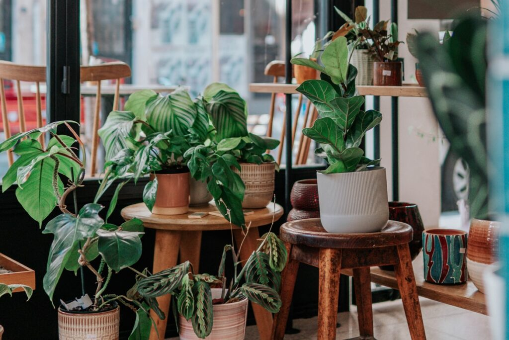 Buying Plants Online in India is Easy with Peppyflora