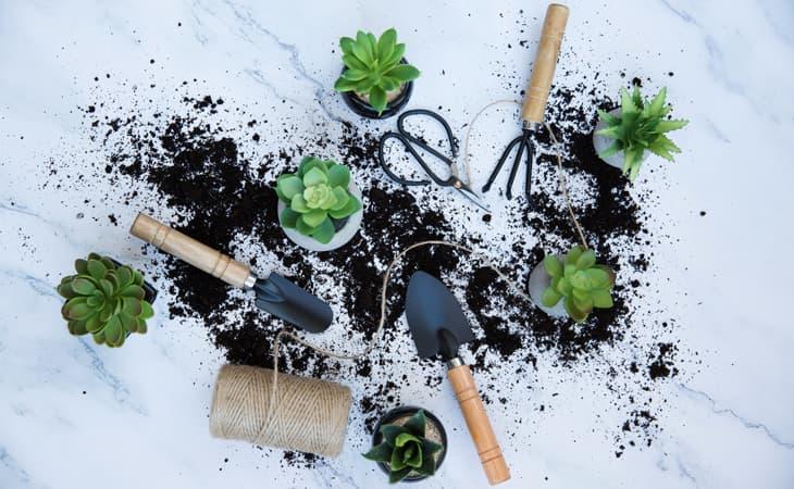 Plant-Care-Accessories-Cat-Peppyflora-01