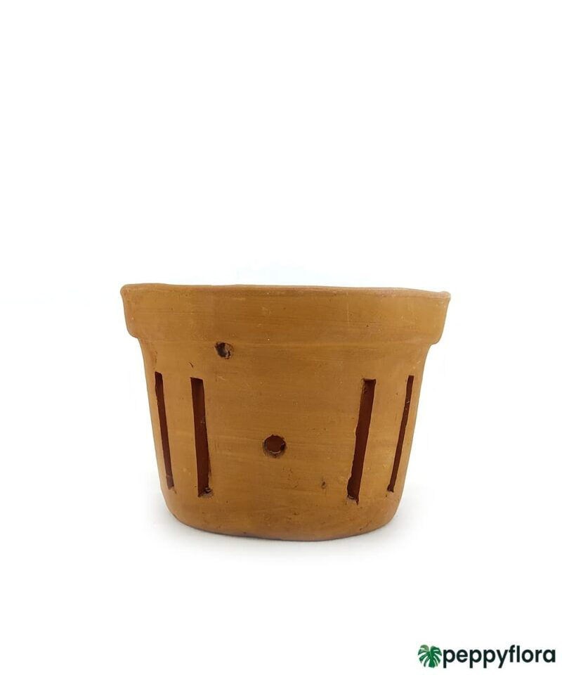 Terracotta-Bucket-Shape-Round-Orchid-Planter-#16722-Product-Peppyflora-01-a-Moz