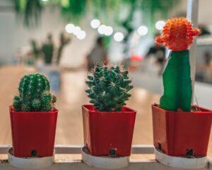 Peppyflora-Cactus-Care-01-Moz