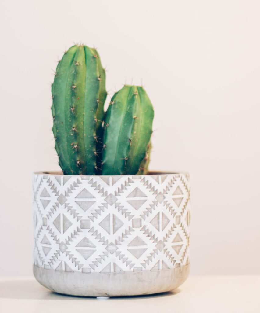 Peppyflora-Cactus-Care-02-a-Moz