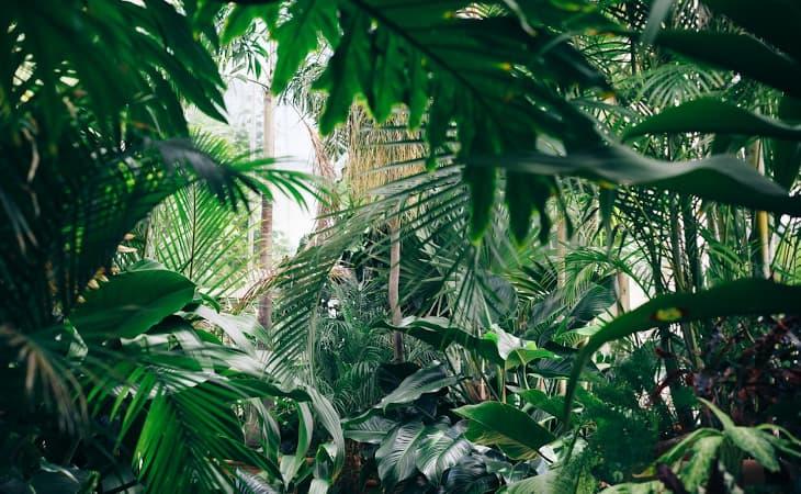 All-Plants-Cat-Peppyflora-01-Moz