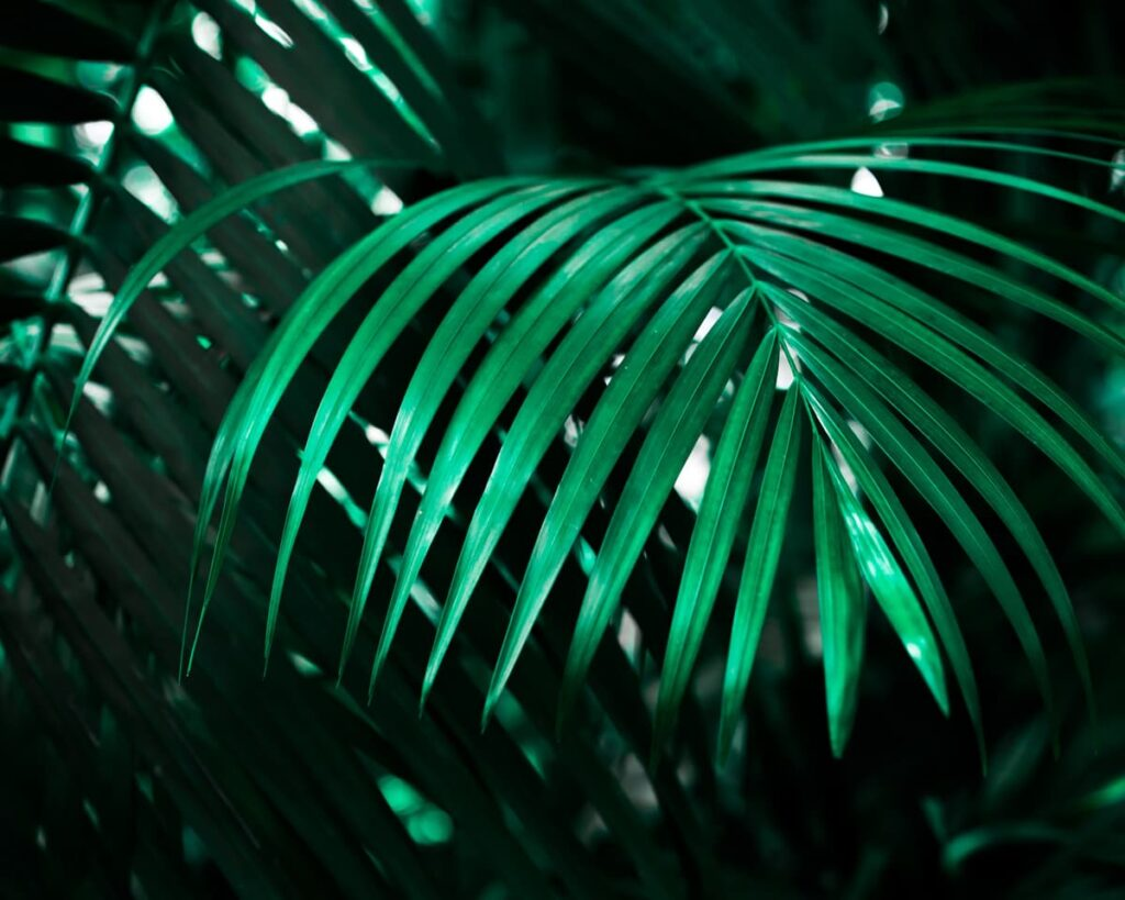 Peppyflora-Palm-Plant-Care-01-Moz