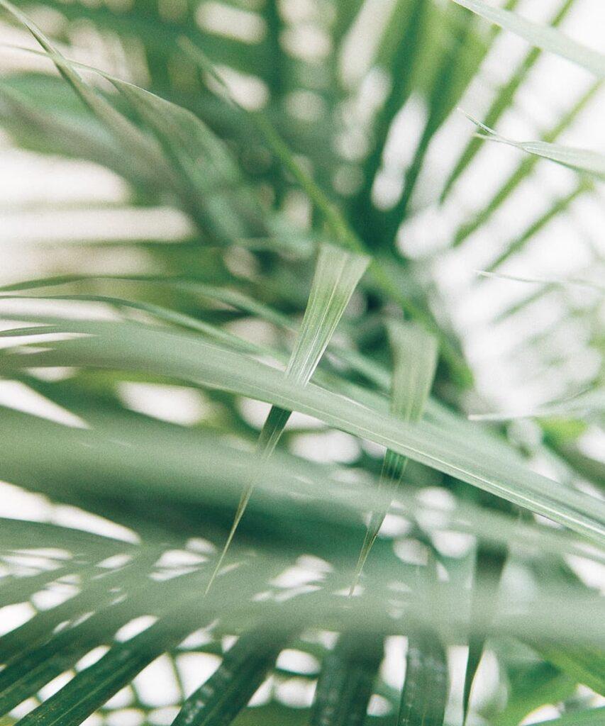 Peppyflora-Palm-Plant-Care-02-a-Moz